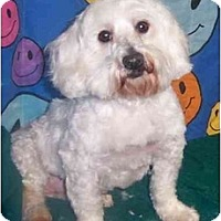 Adopt A Pet :: ROCKY - Rossford, OH