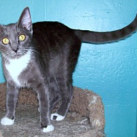 Adopt A Pet :: Prada - Scottsdale, AZ