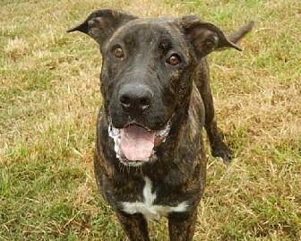 Mastiff Mix Dog for adoption in Anniston, Alabama - Nettie