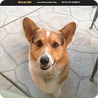 Adopt A Pet :: Tyson - Lomita, CA