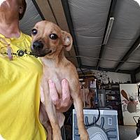 Adopt A Pet :: JOON - Lubbock, TX