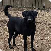 Adopt A Pet :: Hannah - chicago, IL