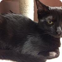 Adopt A Pet :: Jiji - New York, NY