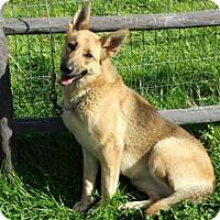 Adopt A Pet :: Elza - Vacaville, CA