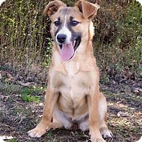 Adopt A Pet :: Mabel - Westport, CT