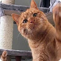 Adopt A Pet :: Gus - Durham, NC