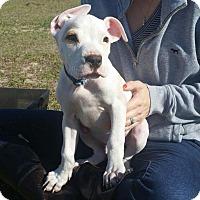 Adopt A Pet :: Cadbury - Ocala, FL