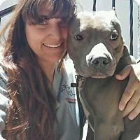 Adopt A Pet :: Isaac - Rye Brook, NY