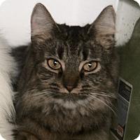 Adopt A Pet :: Ivy - Duncan, BC