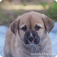 Adopt A Pet :: Michael Scott - Rosamond, CA