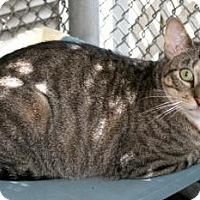 Adopt A Pet :: Ruthie - Bradenton, FL