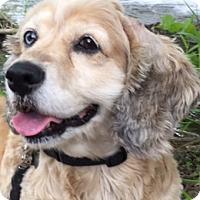 Adopt A Pet :: Loretta Lynn - Sugarland, TX