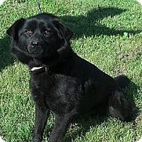 Adopt A Pet :: Honey Bear - Moulton, AL