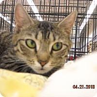 Adopt A Pet :: Evageline - Riverside, RI