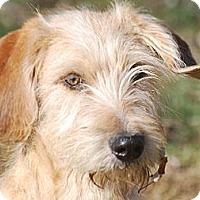Adopt A Pet :: Reese - Providence, RI