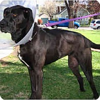 Adopt A Pet :: Licorice - Scottsdale, AZ