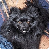 Adopt A Pet :: TANGEE - Hesperus, CO