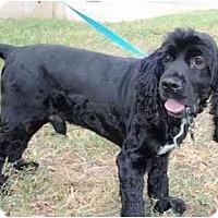 Adopt A Pet :: Teddy - Sugarland, TX