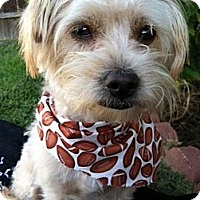 Adopt A Pet :: HONEY - Irvine, CA