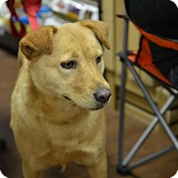 Adopt A Pet :: Nellie SOFT AND SNUGGLY - Tunica, MS