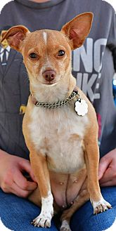 Chihuahua Mix Dog for adoption in Santa Monica, California - Micha