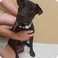 Adopt A Pet :: Tank - Frankfort, IL