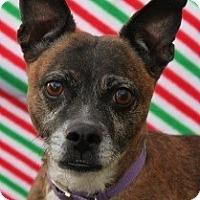 Adopt A Pet :: Patsy Cline - Las Vegas, NV