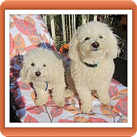 Adopt A Pet :: Adopted!! Primo & Secondo - IL - Tulsa, OK