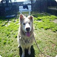 Adopt A Pet :: LIL MACKIE - Long Beach, CA