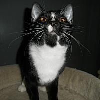 Adopt A Pet :: Elora - Milwaukee, WI