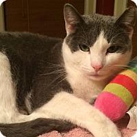 Adopt A Pet :: Doc - Staten Island, NY
