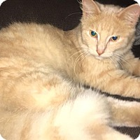Adopt A Pet :: Kiki - Middletown, OH