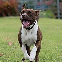 Adopt A Pet :: Tippy - Key Largo, FL
