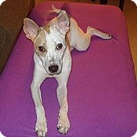 Adopt A Pet :: Lila - Hamilton, ON