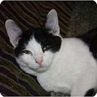 Adopt A Pet :: Jimmy (LE) - Little Falls, NJ