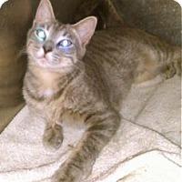 Adopt A Pet :: Peyton - Colorado Springs, CO