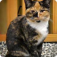 Adopt A Pet :: Kimmie - Byron Center, MI