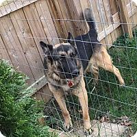 Adopt A Pet :: Gunner - Zanesville, OH