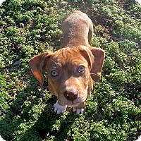Adopt A Pet :: Disney - FOSTER, RI