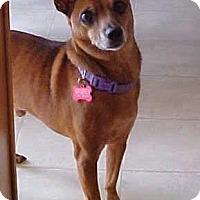 Adopt A Pet :: Joey - 14 lbs - Dahlgren, VA