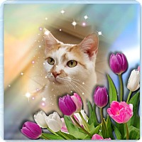 Adopt A Pet :: Peachy Willow - Cincinnati, OH