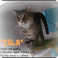 Adopt A Pet :: Isla - Muskegon, MI