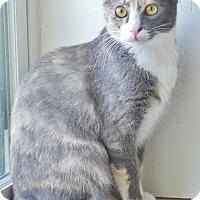 Adopt A Pet :: Abbey - Chambersburg, PA