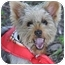 Photo 4 - Yorkie, Yorkshire Terrier Puppy for adoption in West Palm Beach, Florida - Billy the Kid