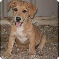 Adopt A Pet :: Bizzy - Adamsville, TN