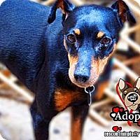 Adopt A Pet :: Mickey - Huntington Beach, CA