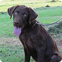 Adopt A Pet :: TYSON - Humboldt, TN