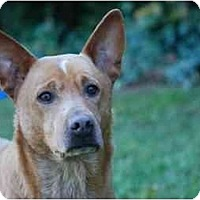 Adopt A Pet :: Blessing - Conyers, GA