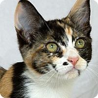 Adopt A Pet :: Whitney - Sacramento, CA