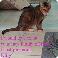 Adopt A Pet :: Kitty - Naples, FL